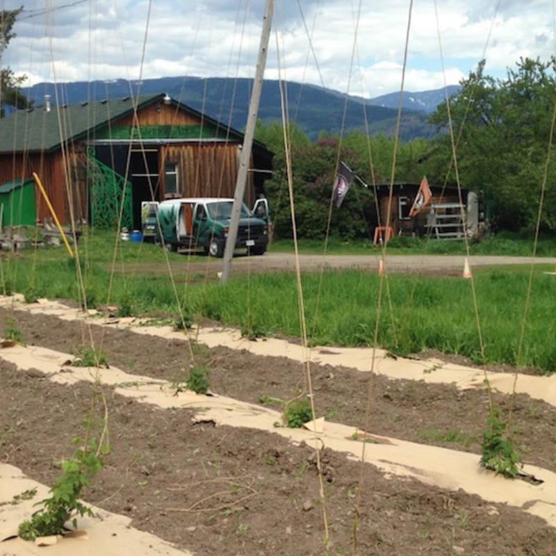 Left Fields Hops Yard 1